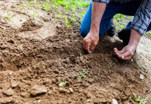 Se gradúan formalmente las dos primeras generaciones de Educadores Ambientales de Xochitla