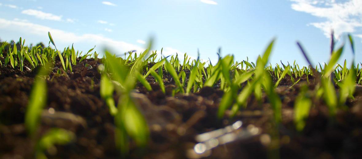 El suelo, un tesoro bajo nuestros pies