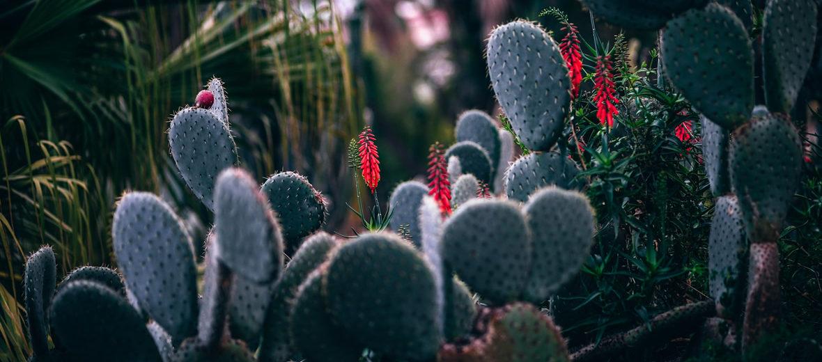 Remedios naturales para combatir plagas