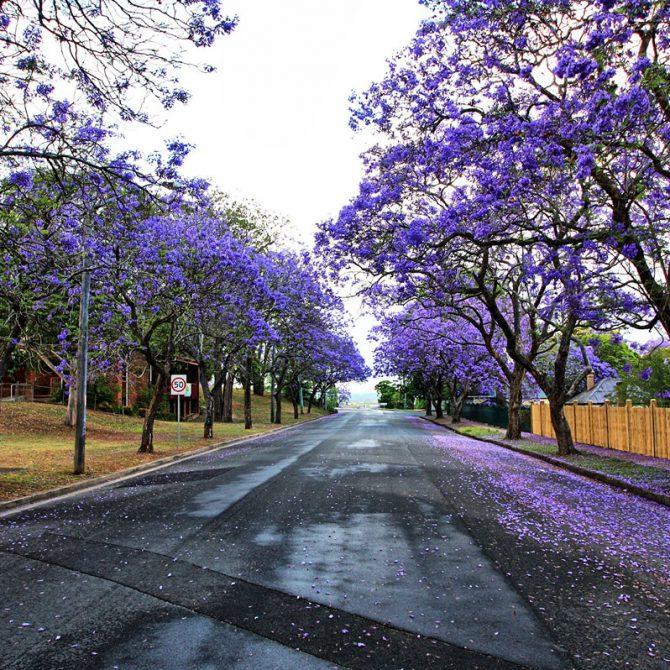 Calle con flores