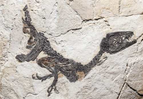 Fósil en piedra