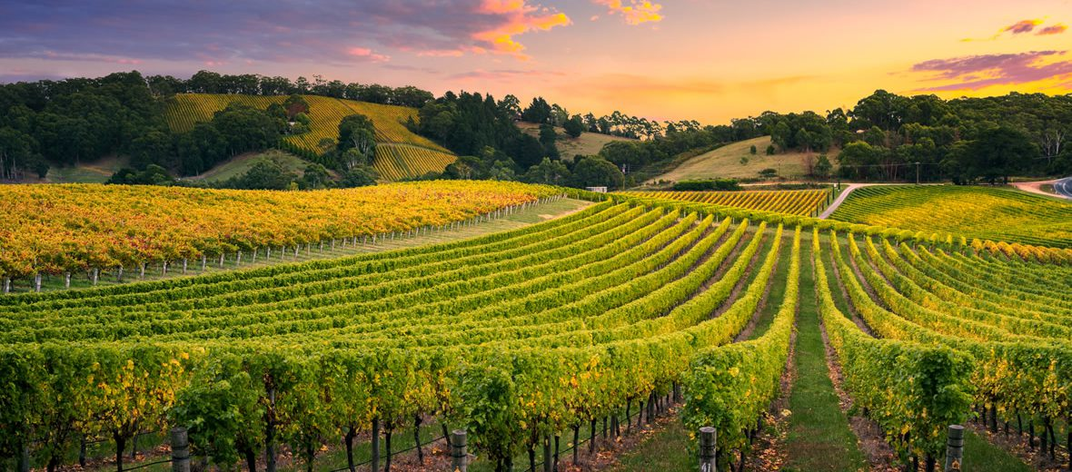 Conoce más sobre las regiones vinícolas de España y sus principales vinos