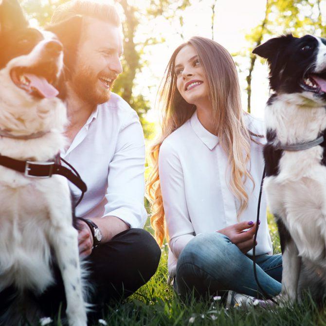 Perros con pareja