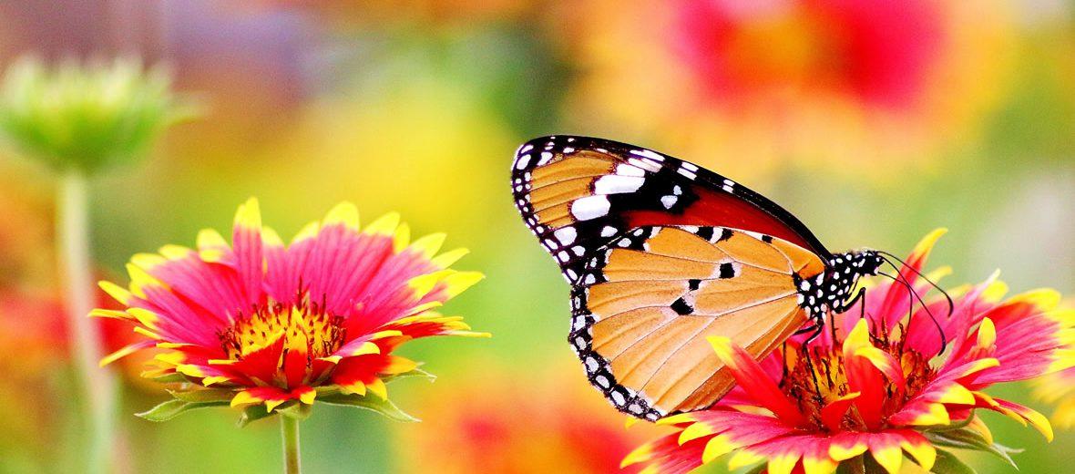 Lo que no sabías de las mariposas