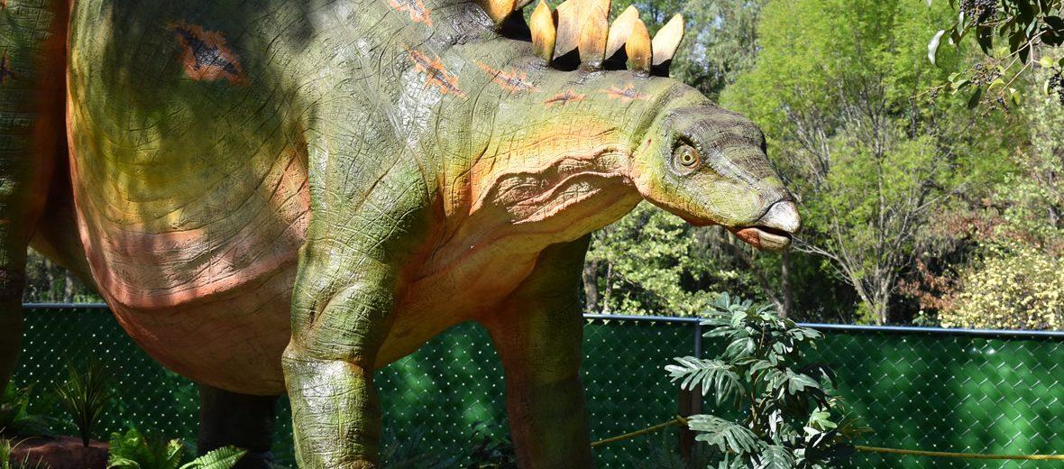 6 datos curiosos sobre los sorprendentes dinosaurios